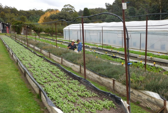 York Town Organics – Bruce & Clare