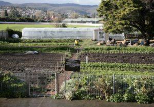 hobart-city-farm-500x350