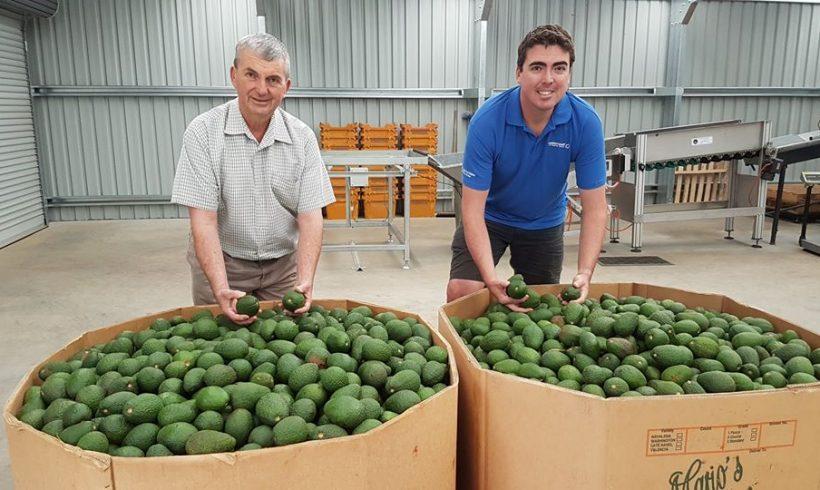 All-Tasmanian wholesale offers – 23rd January