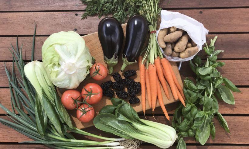 Backyard Bounty all-Tasmanian Vegie box: 21st February